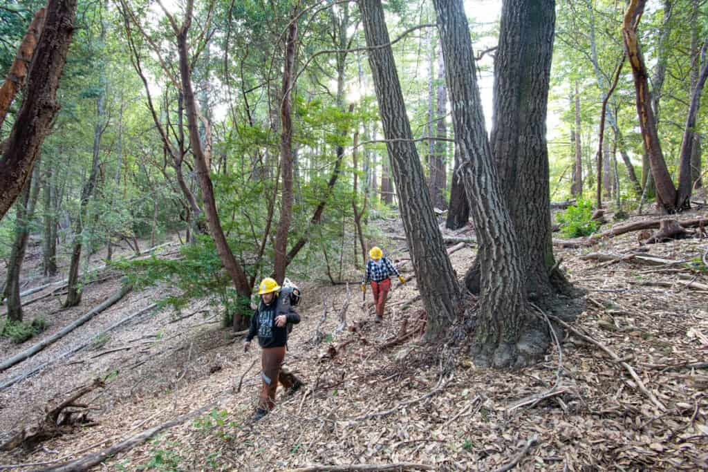 AMLT members carry equipment through a forest after a prescribed burn