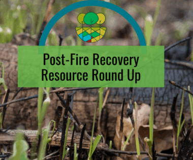 Post-Fire Recovery Resource Round Up