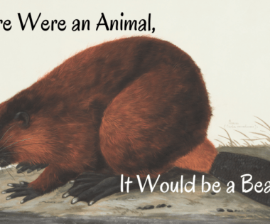 If Fire Were an Animal, it Would Be a Beaver