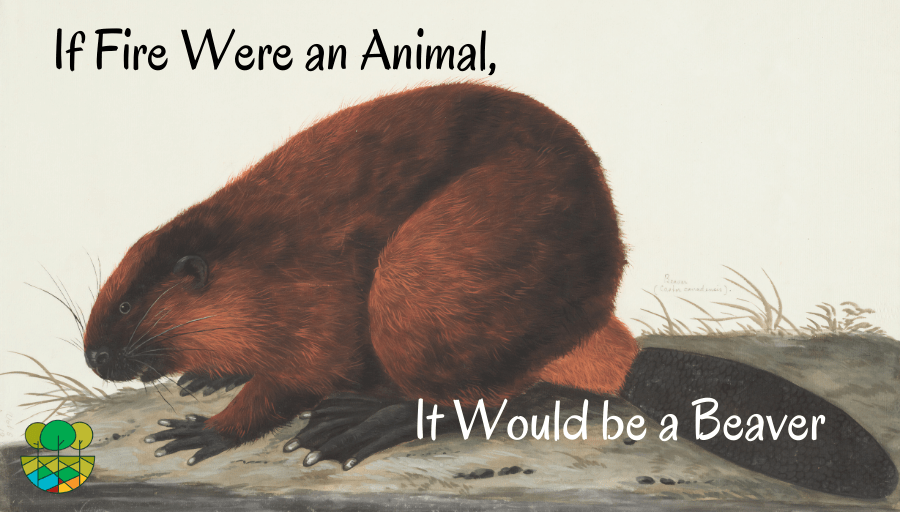 Artistic rendering of a beaver
