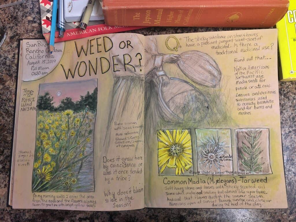 Pages of drawings and text with title Weed or Wonder