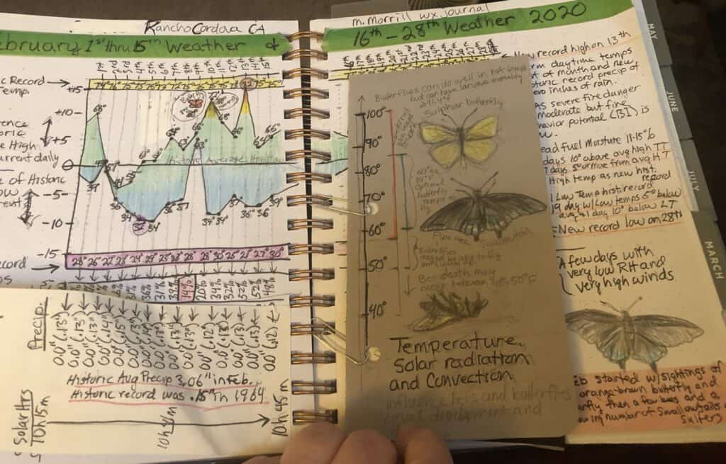 Drawings and text from nature journal