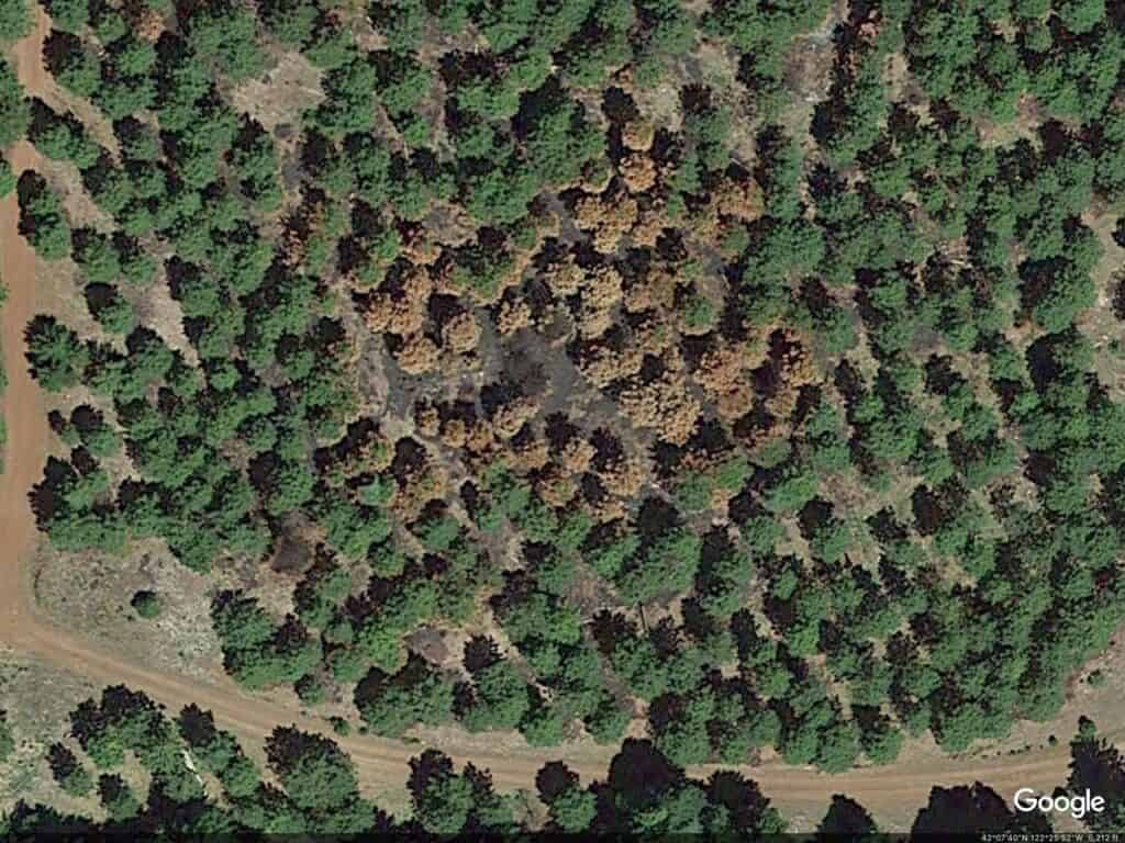 An aerial screenshot from Google Maps showing a brown spot in the middle of green tree cover