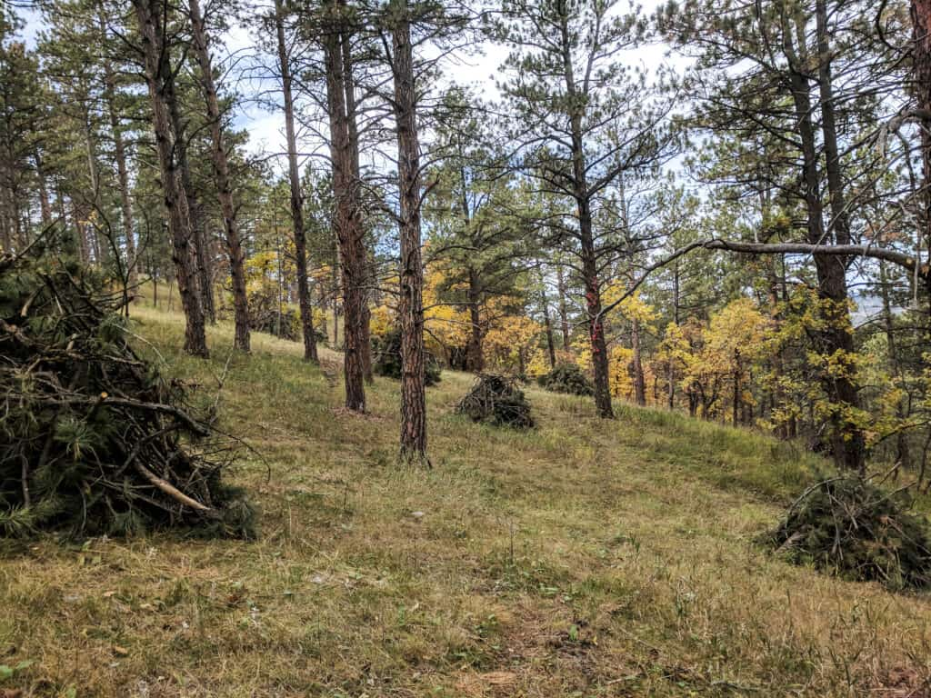 Piles of branches lay out across the forest hillside