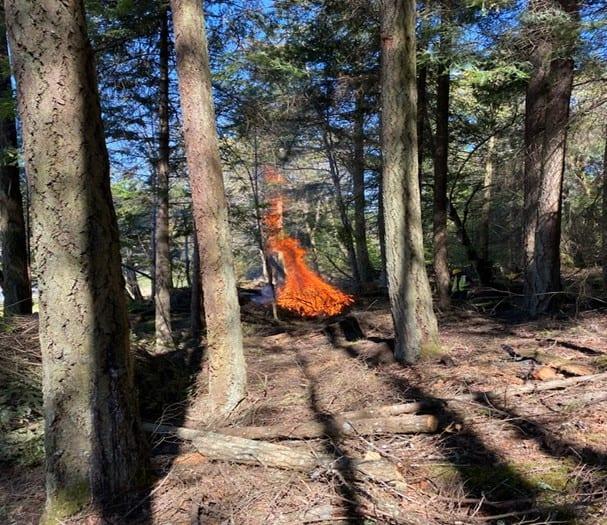 Photo of a pile of brush burning among trees