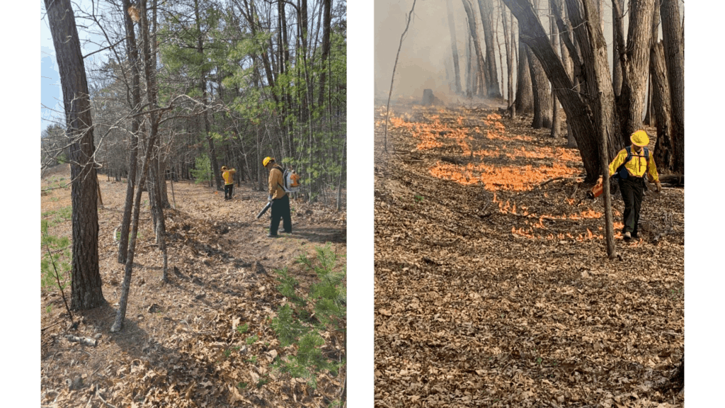 Forest Service firefighters working on prescribed fires in a forest