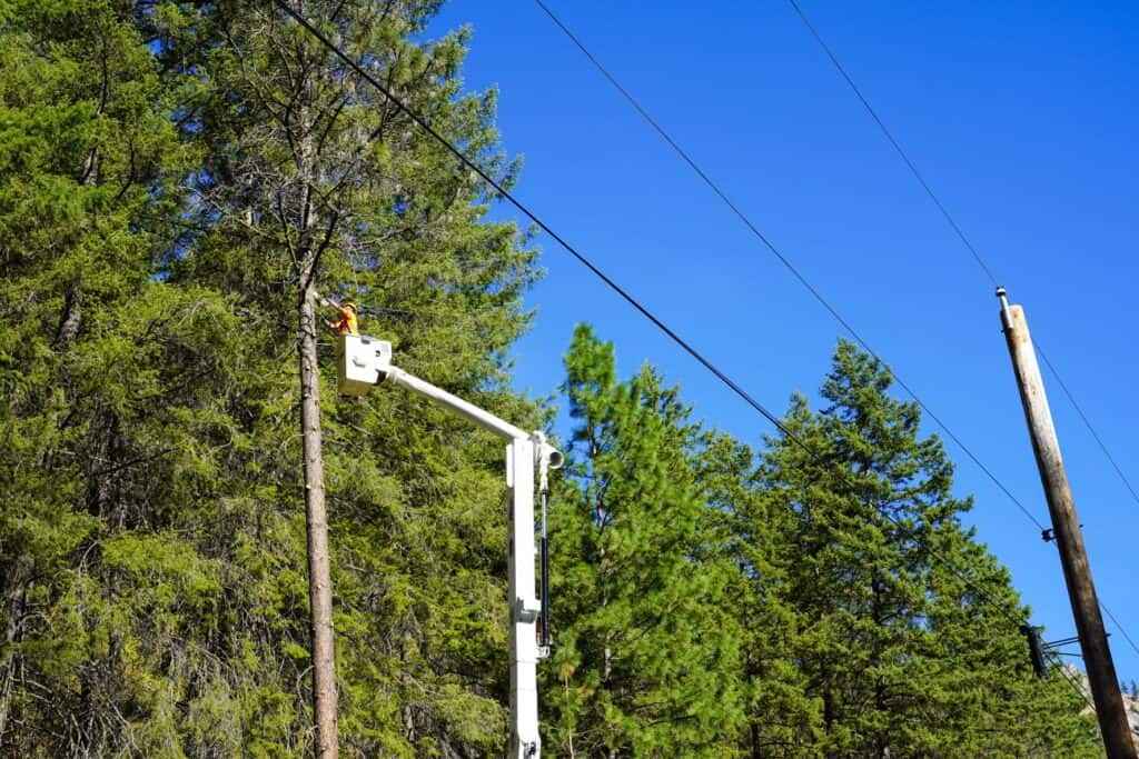 A service person in a bucket truck trims branches away from a telephone pole